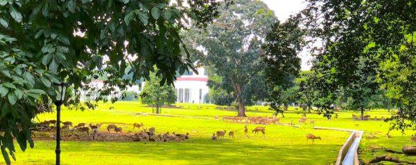 Bogor Praesidenten Palast Vorgarten Botanischer Garten Rehe West Java Indonesien