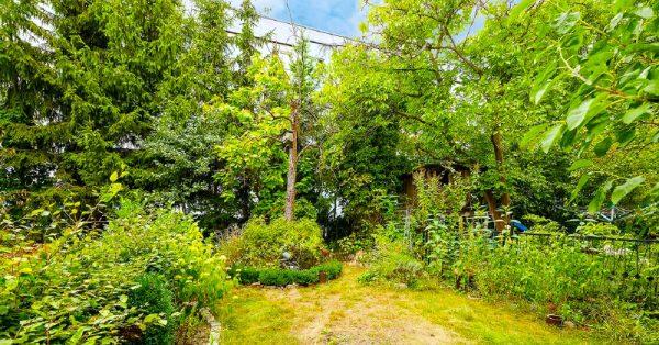 Wohnung Berlin Kauf Objekt 105726 O 56713 Bezugsfrei Wunderschoene Altbauwohnung nahe Mueggelsee o56713_lang8_garten