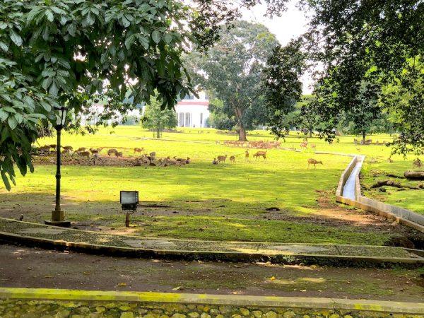 Jakarta-Tourism-Indonesien-Government-Indonesia-Concierge-Trip-recommendation-Empfehlung-Einladung-Gerry-Botschaft-President-Palast-Bogor-Botanic-Garden